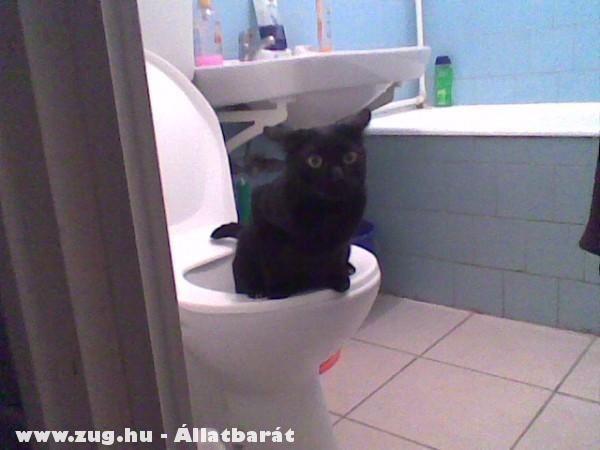 tudom használni a WC-t!