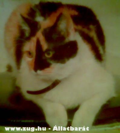 Keresem SYSY macsekomat, kérem segítsenek, köszönöm ...