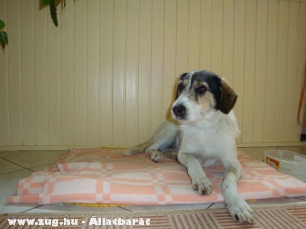 Tara a negyedik kutyánk