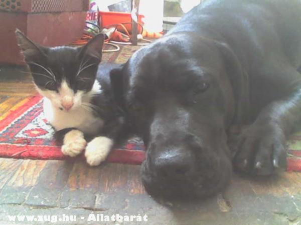 Picúr és Boby,avagy kutya macska barátság