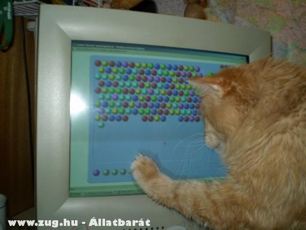 Sámson és számítógép.