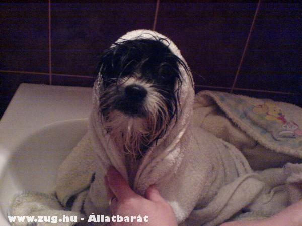 Pupu fürdik itt 4honapos volt