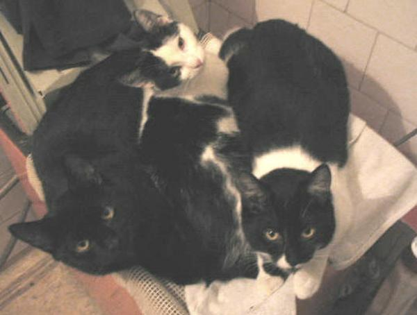 Kormi, Szendi és Cili - a 3 testvér