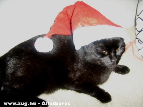 Karácsonyi cica