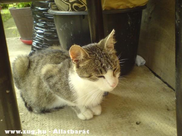 Mici a cicám (Katze)