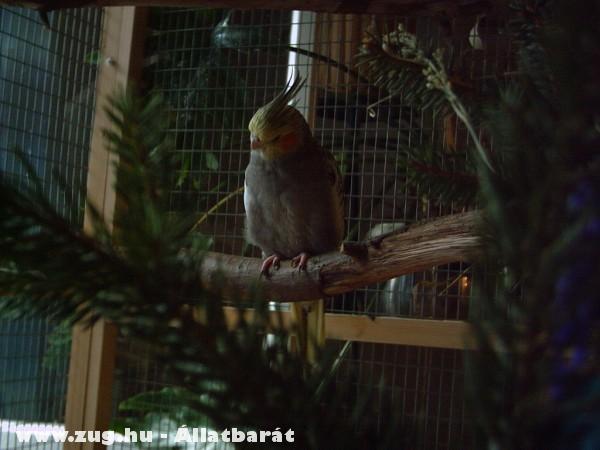 Jojo karácsonykor