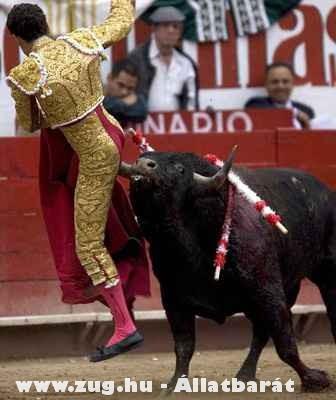 Anális élmény :)))) Hajrá bika!!!