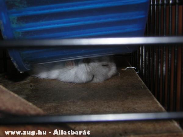 Bizsu és az alvási szokások :)