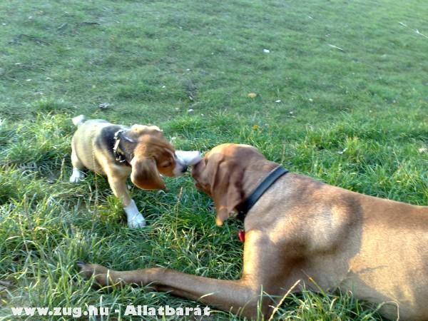 Lili és Bruno