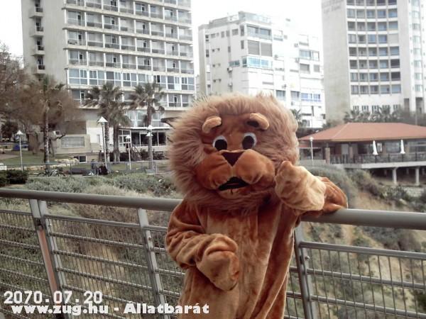 Szeliditett oroszlan