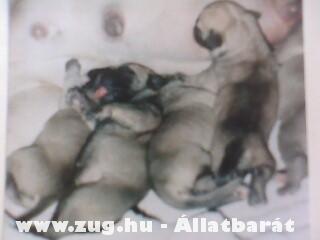 Hát megszülettünk és eszünk a 7 kis gonosz:))