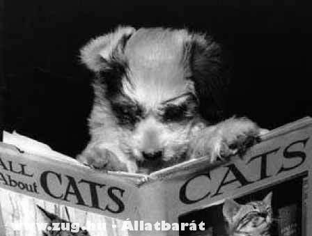 Kutya olvas a macskákról