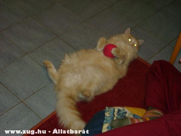 ♥Ribizli macskám (eddig Noah.)♥