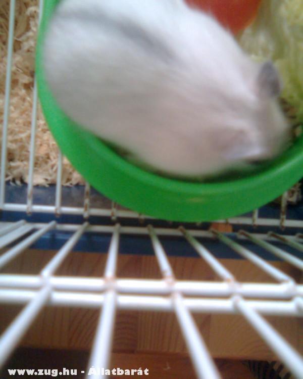 Kefir eszik :D