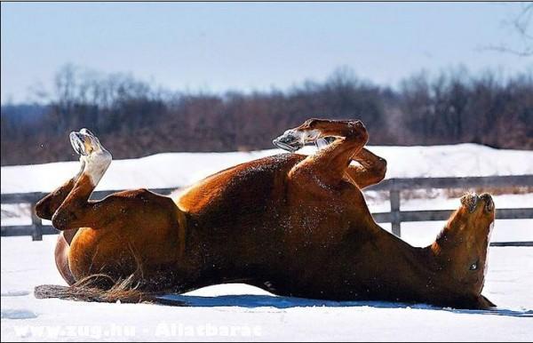 Fetrengõ ló
