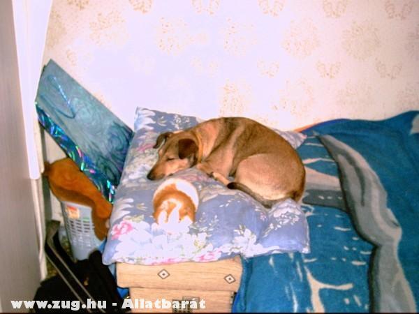 Kutya és tengerimalac 2