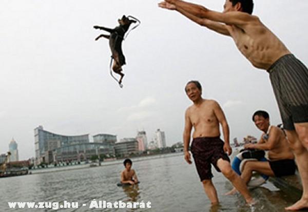 Vízbe dobták a kutyát :(
