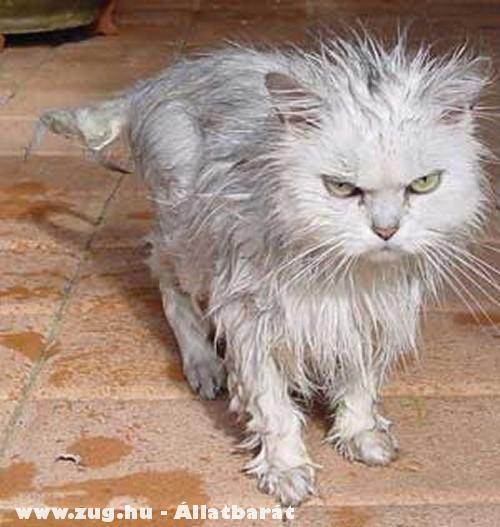 A cica a fürdõszobának bosszút esküdött