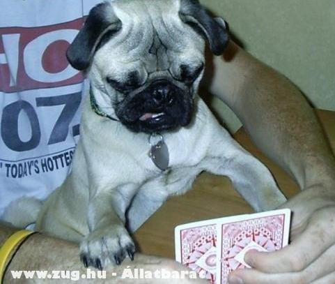 Kártyázó kutya