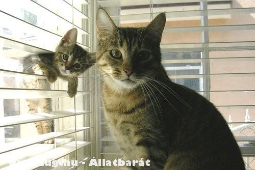 Két cica