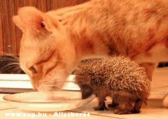 A cica és a süni együtt ebédel