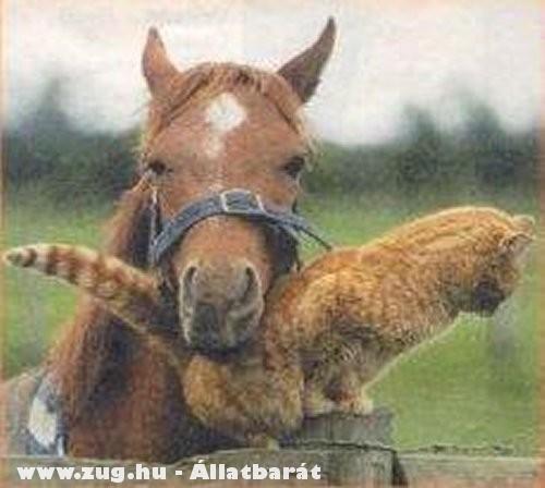 A ló szereti a cicát :D