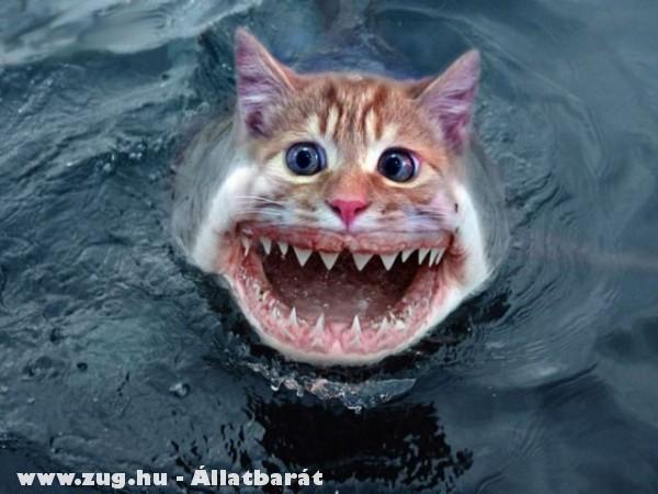 Cápa macska?!