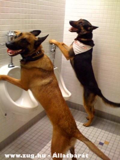 Kutya wc, kutyus piszoár