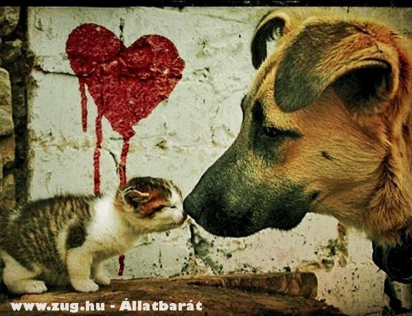Németjuhász kutya és a cirmos cica?!