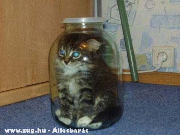 Szegény cica, ez durva!