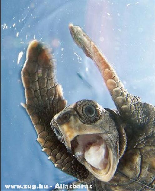 Teknõc az óceánban - segítség mély!!!