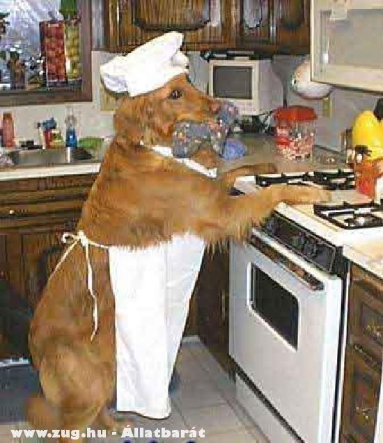 Házias kutya