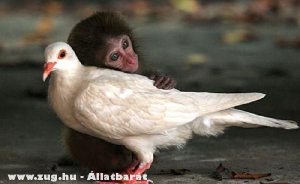 Barátra lelt egy majom