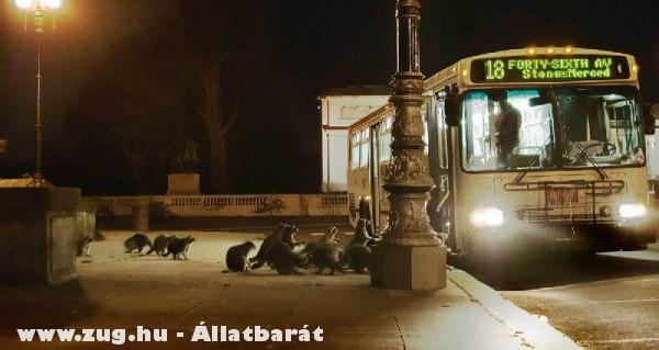 Állatok szállnak a buszra
