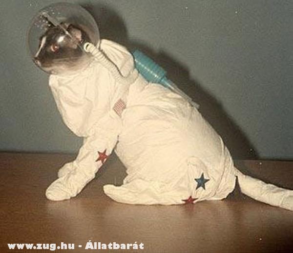 Asztronauta macsek