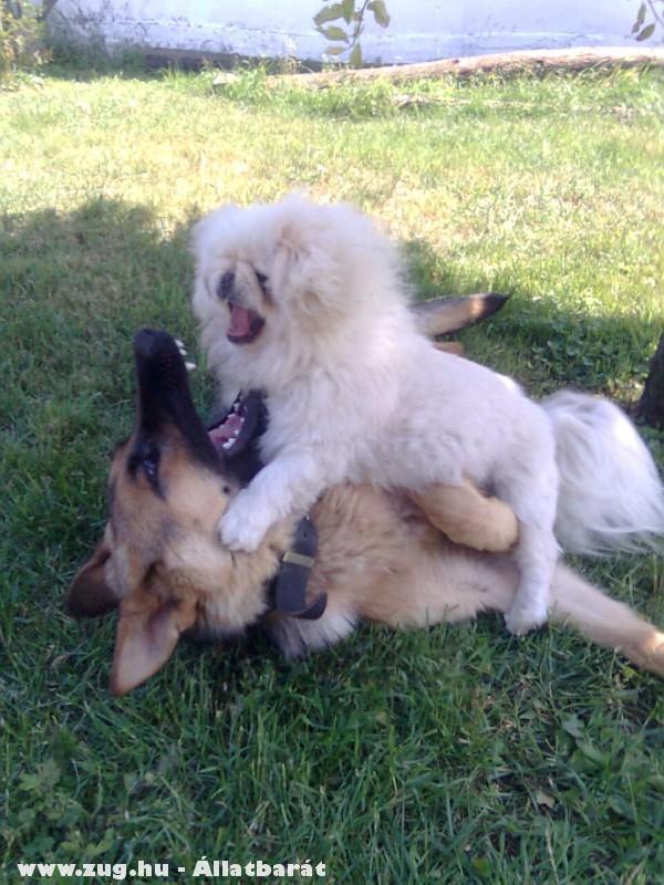 Molly és Roxy