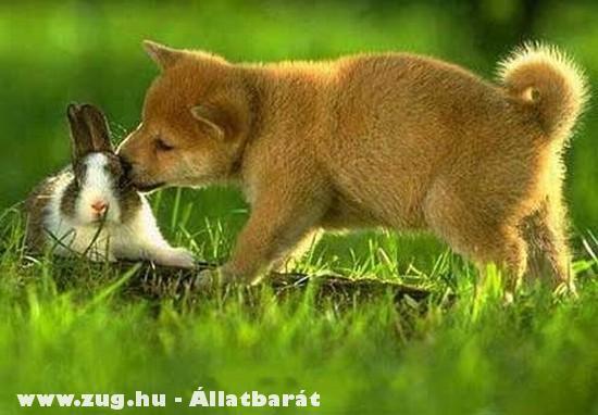 Egy barátság köttetik