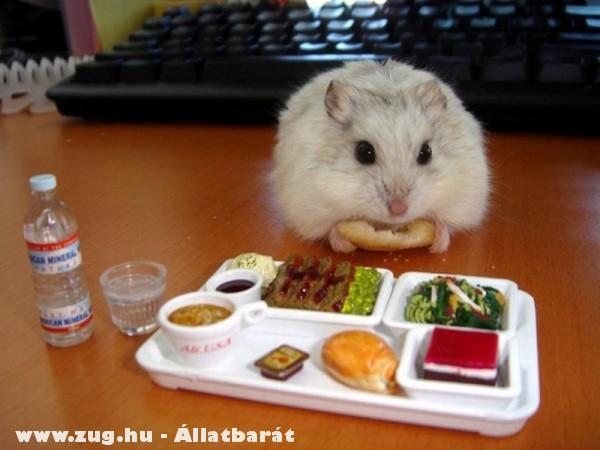 Ebédidõ