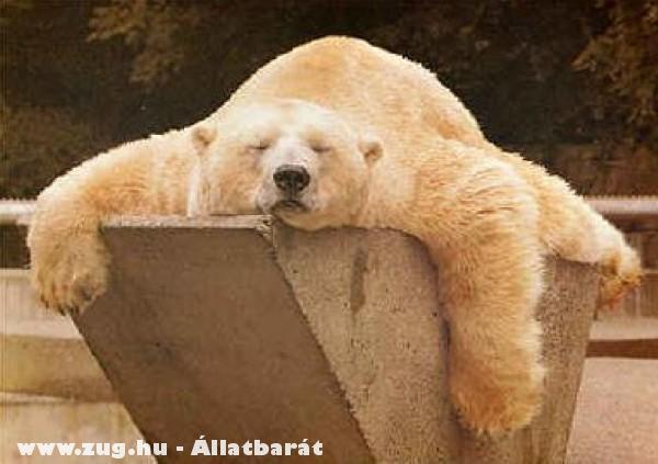 Ebéd utáni pihenõ