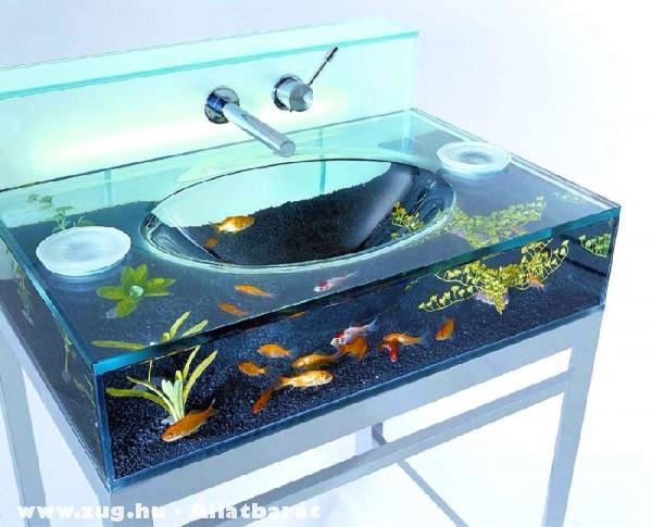 Érdekes akvárium