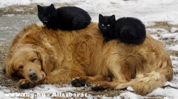 Kutyán pihenõ cicák