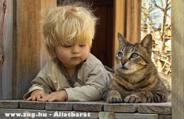 Kisgazdi és a cicája