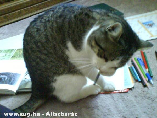 Nyarvinka ceruzát hegyez