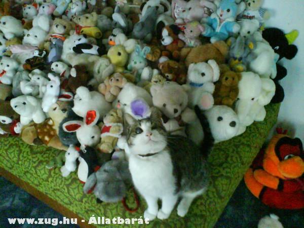Itt a cica hol a cica?!