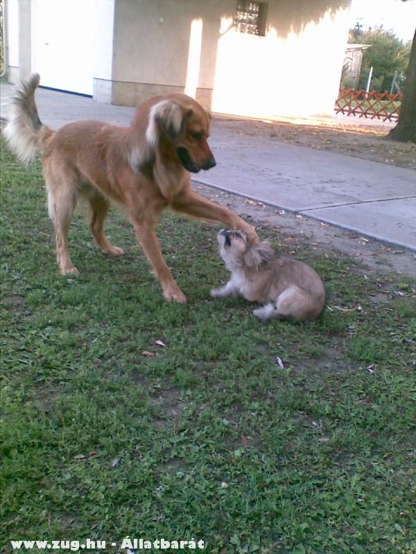 Kicsi barátkozik
