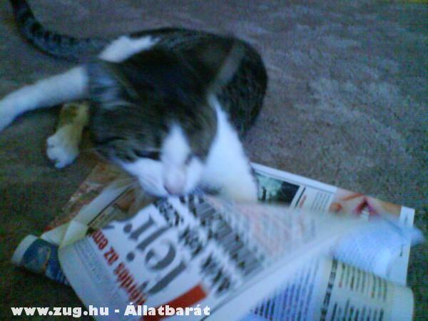 Nyarvi újságot olvas XD
