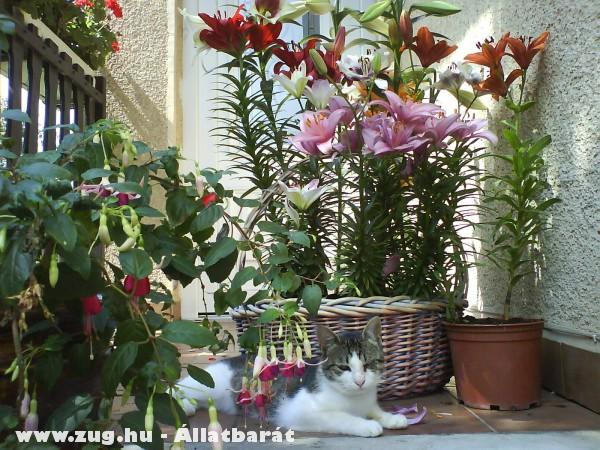Nyarvinka virágkoszorúba