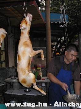 Kutya vacsorára?!