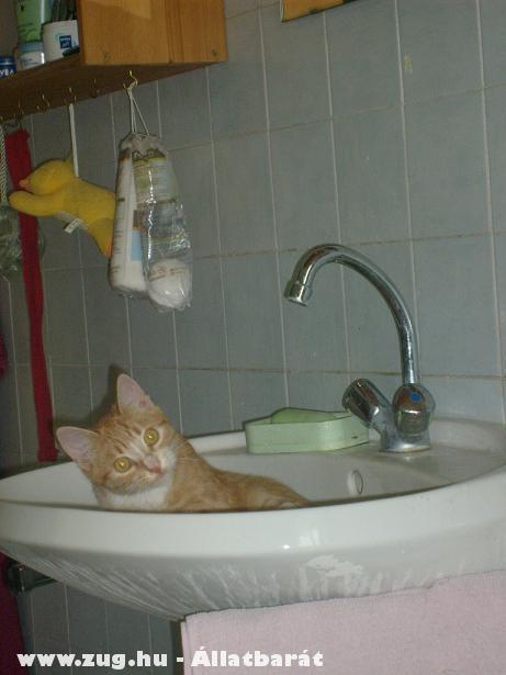 Valaki beköltözött a mosdóba.