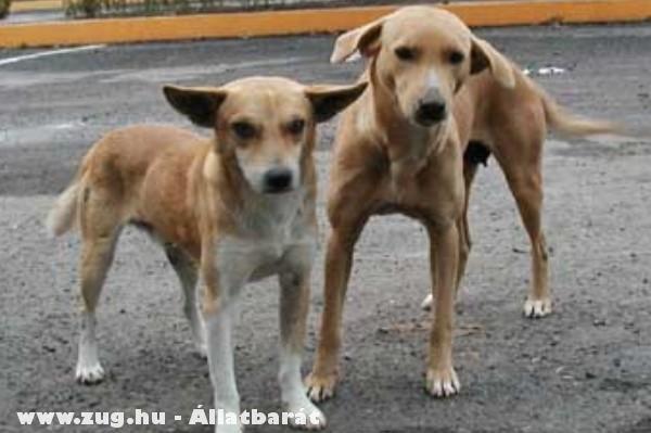 Kóborka kutyuskák